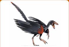 موسوعة عــالــم الديناصورات ...... Dinosaurs World وفيديو dc_card_archa.jpg
