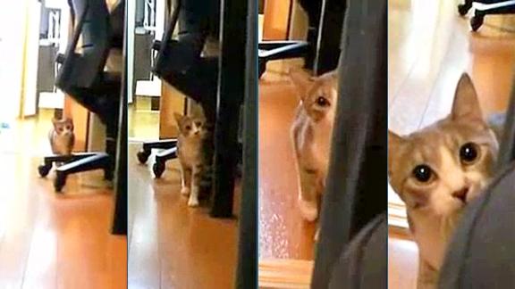 Ninja Cat @ Yahoo! Video