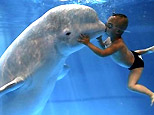 Yang Yang, 3, kisses a Beluga Whale during a publicity photocall at the Qingdao Polar Ocean World, China, June 2, 2007. (Reuters)