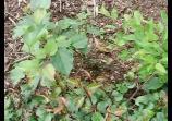Bonsai, plantones ubicados en tierra(2) @ Yahoo! Vídeo